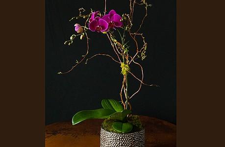 Fuschia Orchid